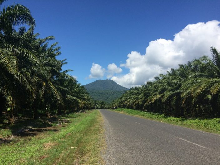 Driving between palm plantations - Papua New Guinea