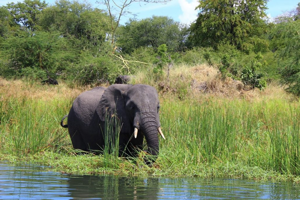 Elephants by the river - Liwonde National Park, Malawi