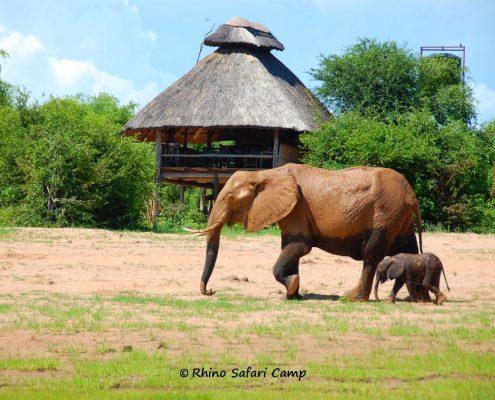 Rhino Safari Camp, Zimbabwe