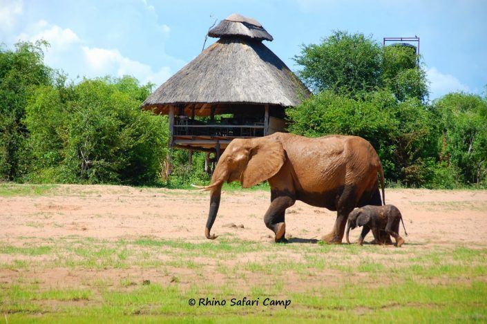 Rhino Safari Camp, Zimbabwe