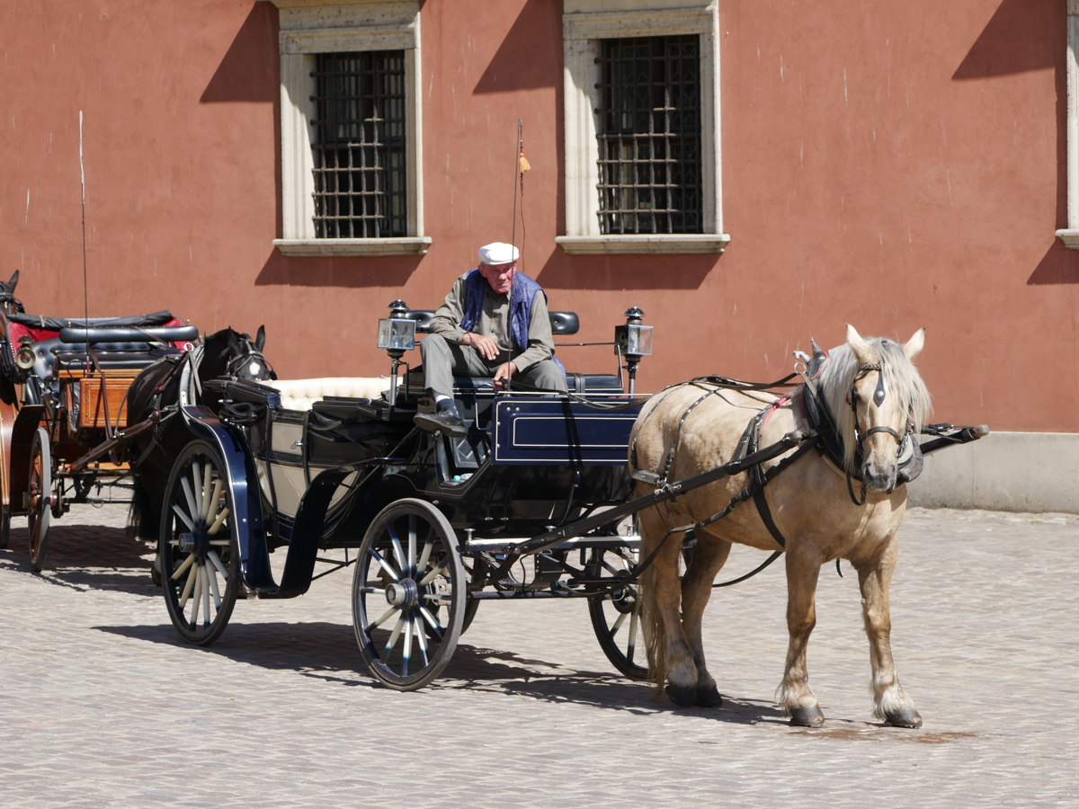 A local man waits patiently for tourists to give them a ride around Warsaw Old Town in a horse and cart
