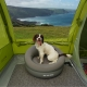 UK Dog-Friendly Coastal Campsites - Adventure Bagging