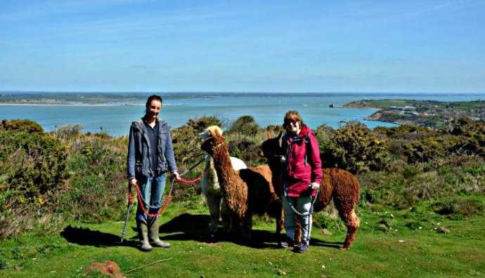 West Wight Alpaca Farm - Walking - Isle Of Wight