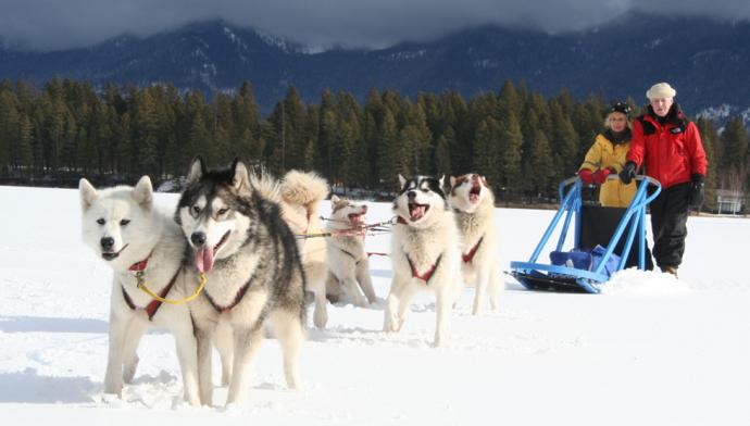 Dog sledding in Chamonix
