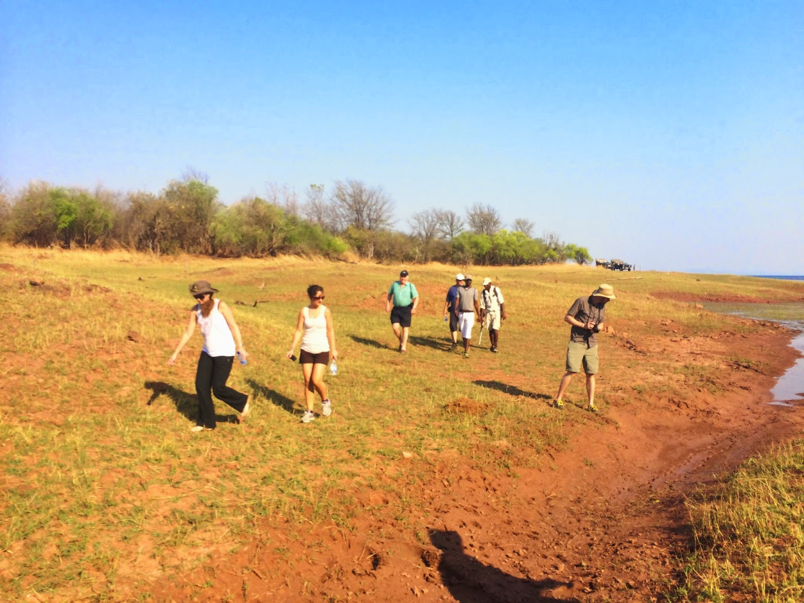 On foot in search of lions - Matusadona National Park