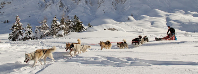 Dog sledding and husky rides in Tignes with Evolution 2