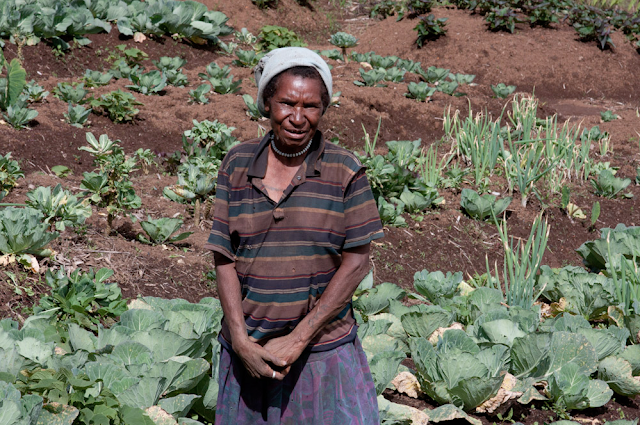 A villager tends to her vast array of crops in Mount Hagen