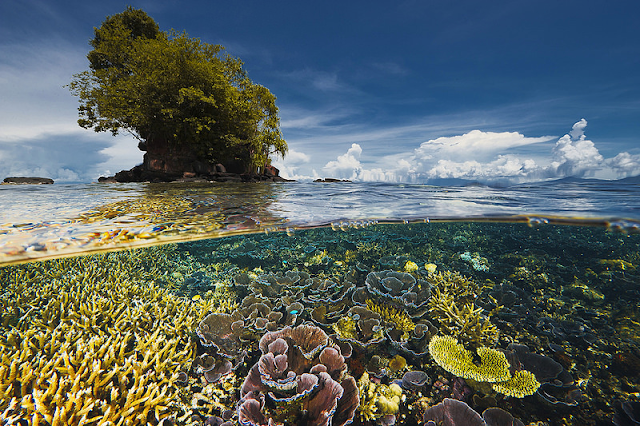 Underwater picture by David Doubilet - Kimbe Bay, Papua New Guinea