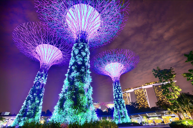 Singapore's tree lights - Supertree Grove