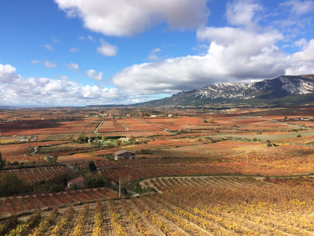 The endless Autumn coloured landscape of the Rioja Alavesa region
