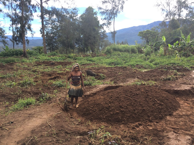 Preparing the soil for planting sweet potato - Tari, Papua New Guinea
