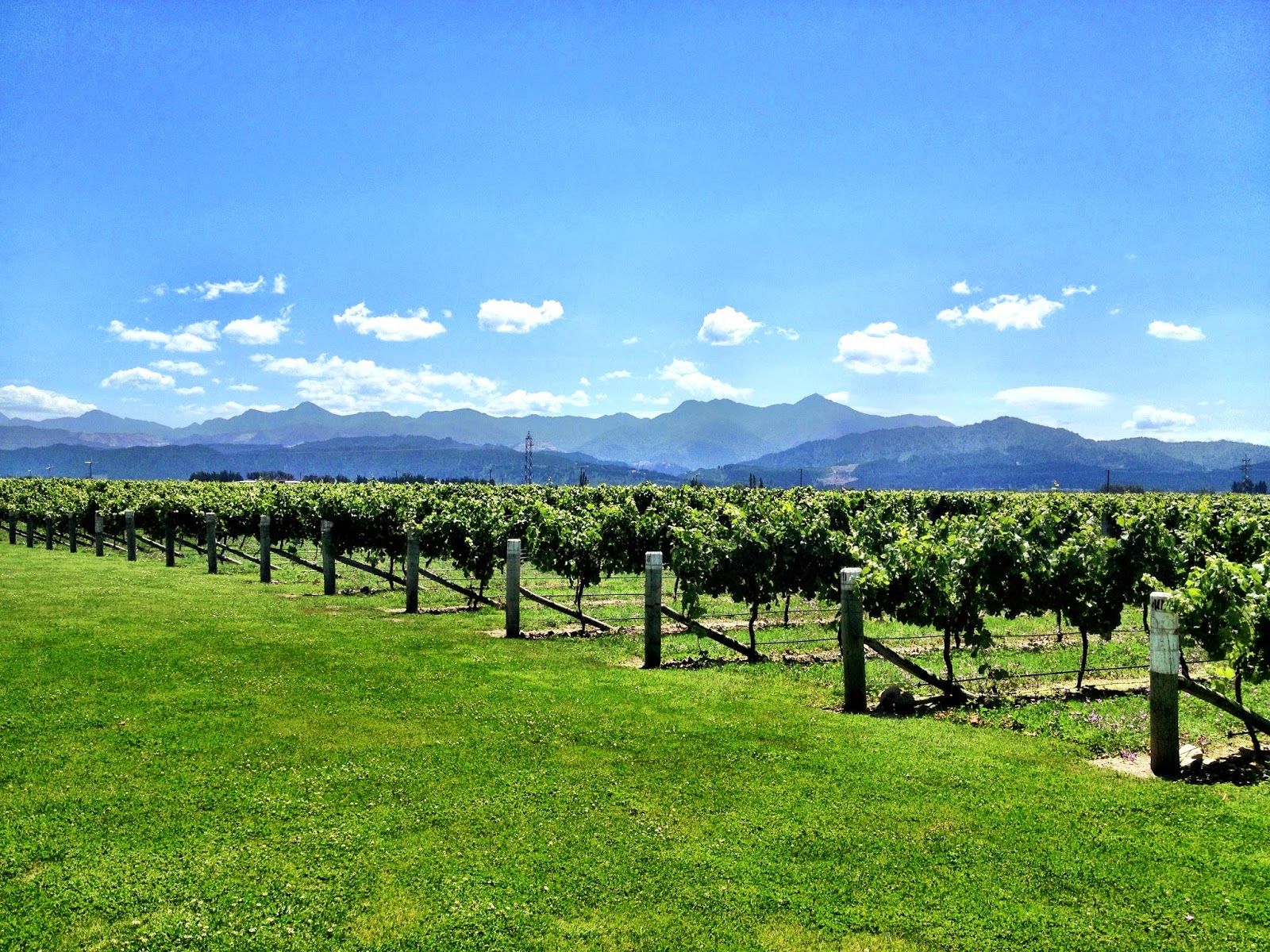 View from Spy Valley winery, Marlborough, New Zealand