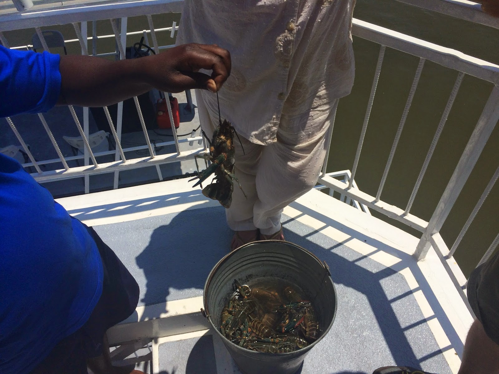 Fresh crayfish ready for the cooking pot onboard Umbozha
