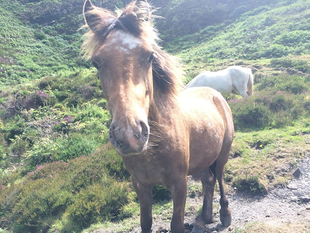 Horses on the South West Coast Path
