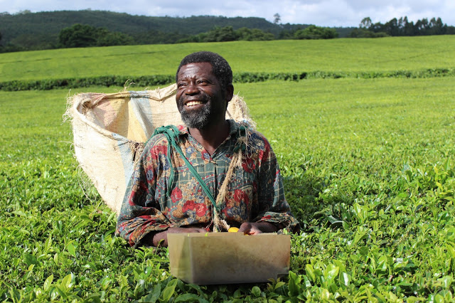Meet Fraser, one of the longest serving members of the Satemwa Tea Estate community