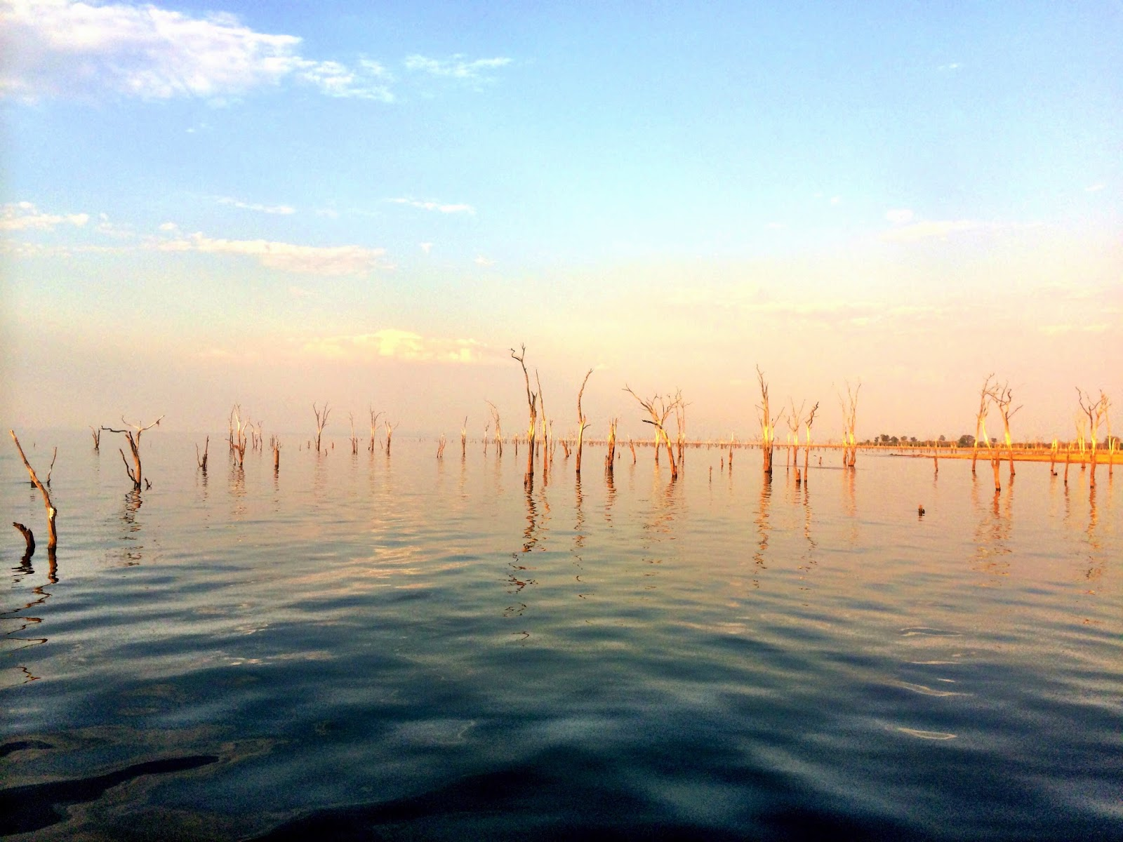 Dead trees protrude the surface of the lake and show recent water levels