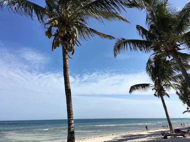 Palm trees at Tiwi Beach Kenya - Winter Sun