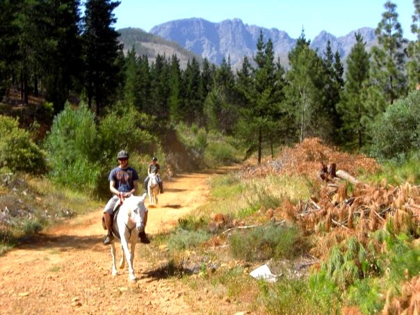 Horse riding through the forest in Franschhoek